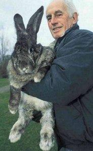 big rabbit 3